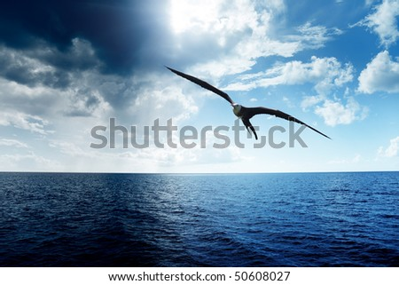 albatross and caribbean sea