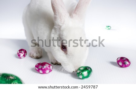 Albino Easter Bunny Rabbit with chocolate eggs - stock photo