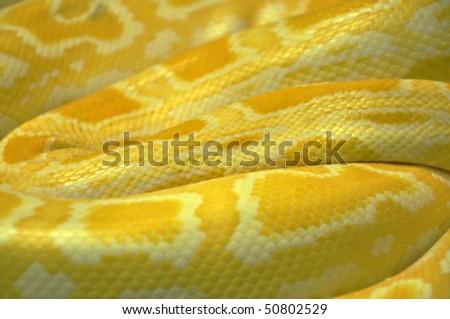 Albino python snake skin, texture image - stock photo