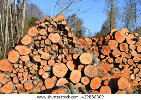 alder firewood log stack in early spring - stock photo