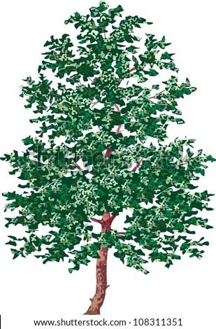 alder tree - stock photo