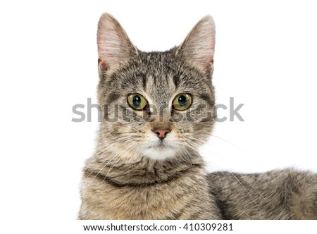 Alert adult tabby cat isolated on white background - stock photo
