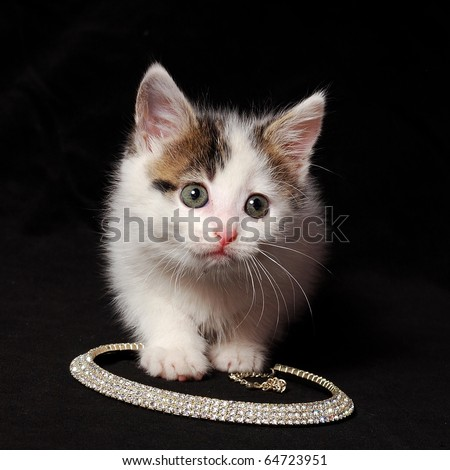 alert cat sits on a necklace - stock photo
