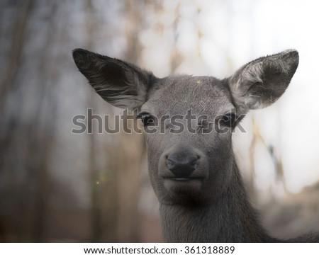 alert deer in the wild - stock photo