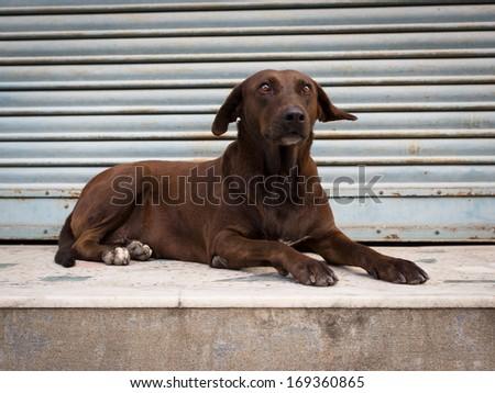 Alert dog rests on an empty shop verandah in Nepal - stock photo