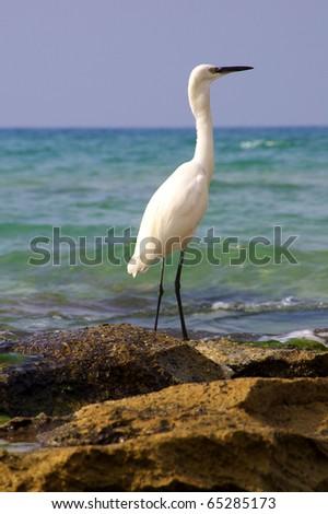 Alert egret heron on rocks by the shore - stock photo