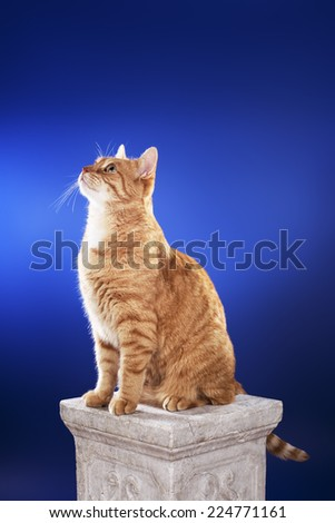 Alert senior 10 year old ginger cat sitting on a column. - stock photo