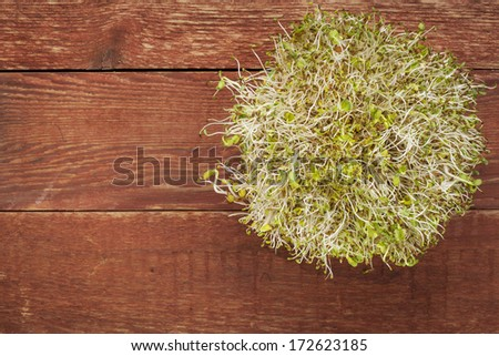 alfalfa and radish sprouts against red rustic barn wood table with a copy space