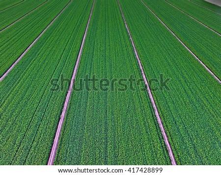 Alfalfa Fields - stock photo