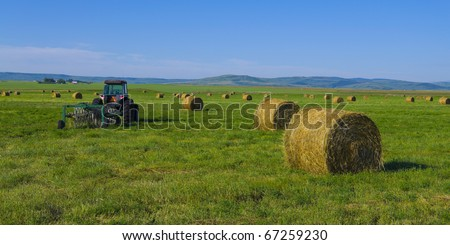 Alfalfa hay bales in a field with tractor in the Canadian prairie's, Alberta, Canada