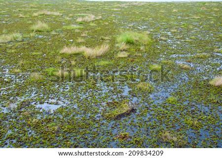 algae in river - stock photo