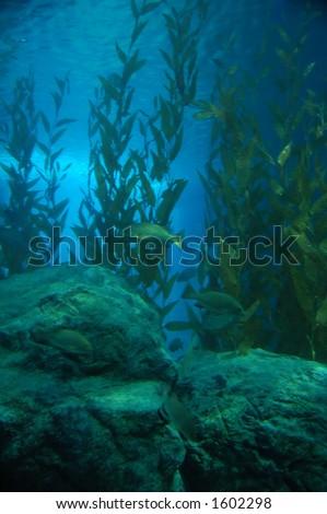 Algae underwater - stock photo