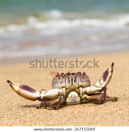Alien Creature By the Sea  - stock photo