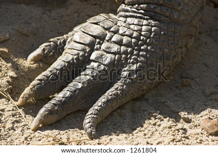 Aligator's hand - stock photo