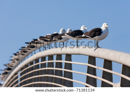 Aligned group of seagulls on the railing of a bridge - stock photo