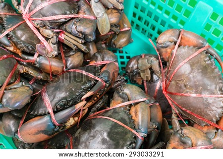 Alive crab tie with plastic rope in the basket at fresh market, Thailand. - stock photo