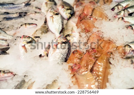All kinds of frozen fish on the market. - stock photo