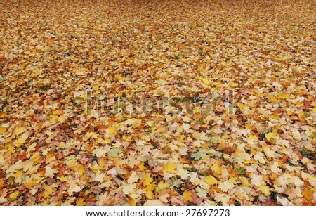 All land covered with autumn leaves. - stock photo
