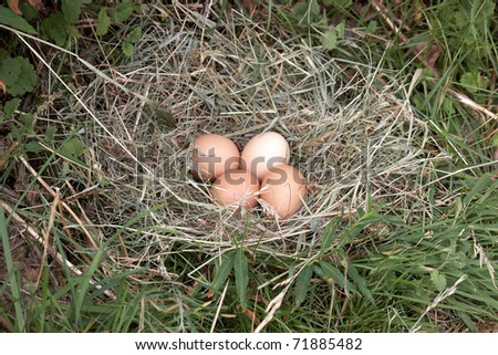 All of your eggs in one nest