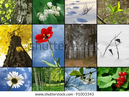 all seasons nature  collage