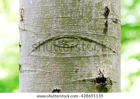 All-Seeing Eye of God on a tree bark, also called Eye of Providence. Symbol for the eye of God, watching over mankind or devine providence. Macro photo. - stock photo