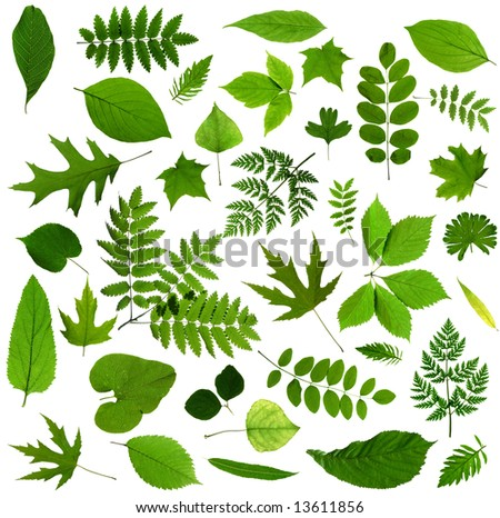 All sorts of green leaves from trees and shrubs isolated on white background - stock photo