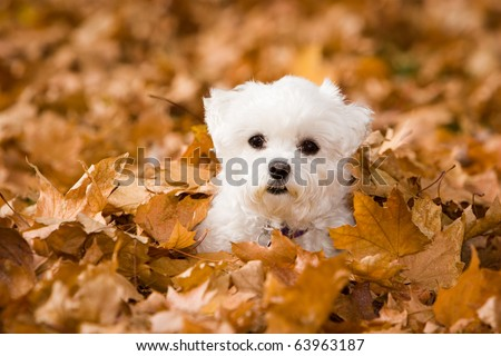 Alle in the Leaves - stock photo