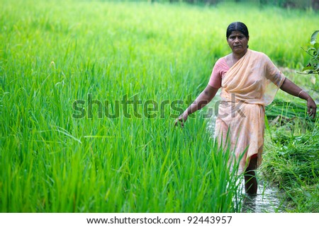 ALLEPPEY, INDIA - FEBRUARY 3:Unidentified Indian woman working in a rice paddy on February 3, 2011 in Alleppey, India. Alleppey or Alappuzha is well known for it's rice fields.