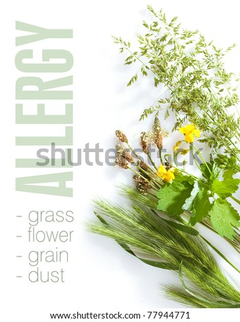 Allergic types of grass on white background. Space for text isolated on solid color. - stock photo