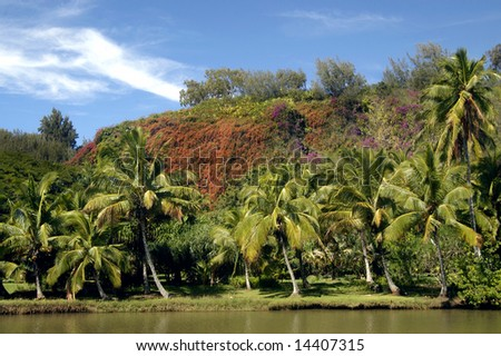 Allerton Gardens is in bloom with bougainvillea covering the mountain side in purples and orange.  Palm trees and river bank are bright in sunshine with blue skies. - stock photo