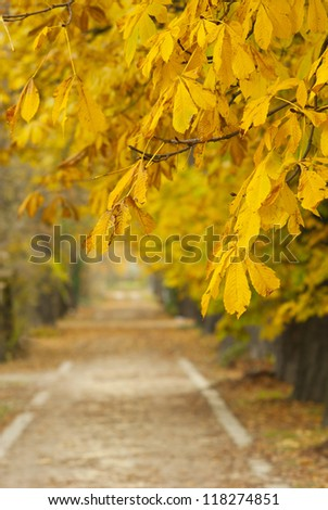 alley at autumn - stock photo