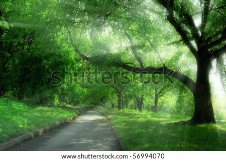 alley in park and sun rays - stock photo