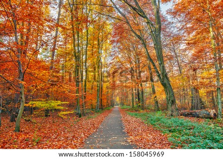 Alley in the colorful autumn park - stock photo