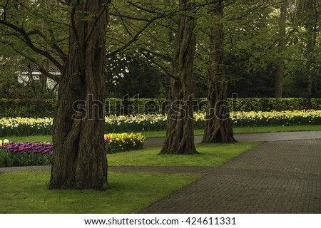 Alley in the park with a variety of flower bulbs and old trees - stock photo
