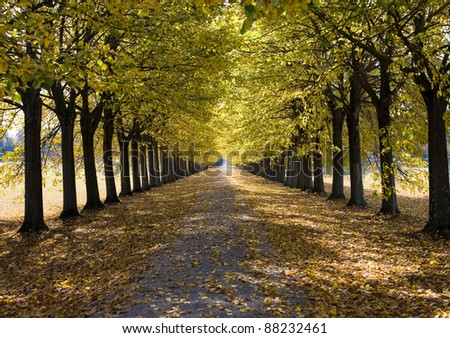 Alley in Tuscany - Road running through an autumnal tree alley. - stock photo