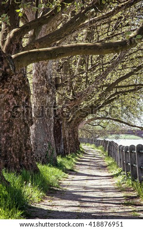 Alley of sycamore tree and retro railing. Footpath scene. Park scene. Romantic place. Vertical composition. Massive trees. - stock photo