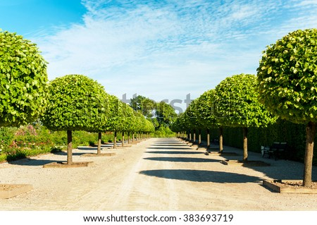 Alley of topiary green trees with hedge on background in ornamental garden on a blue sky background in Rundale park. Latvia. Vibrant summertime outdoors horizontal image. - stock photo