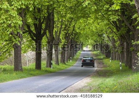 alley of trees in germany - stock photo