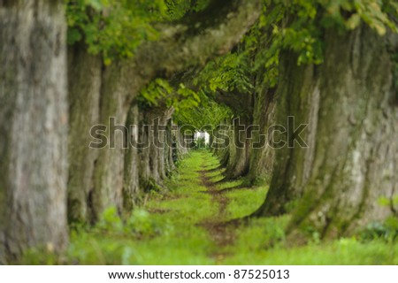 alley with chestnut trees in upper bavaria, Germany - stock photo