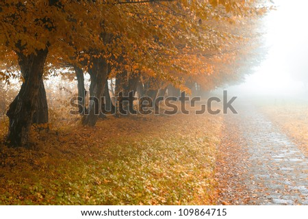 alleyway in foggy park. Autumn, rainy weather - stock photo