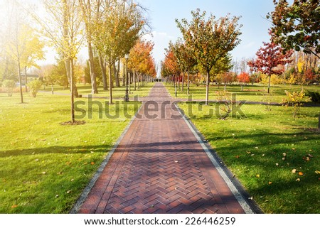 Alleyway in park. Autumn nature background - stock photo