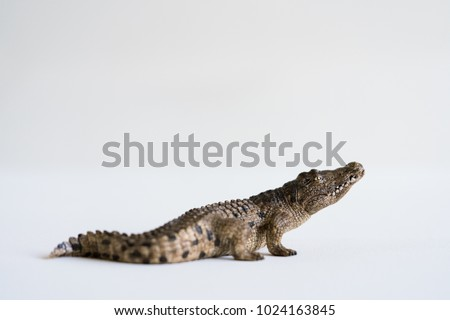Alligator on White Background