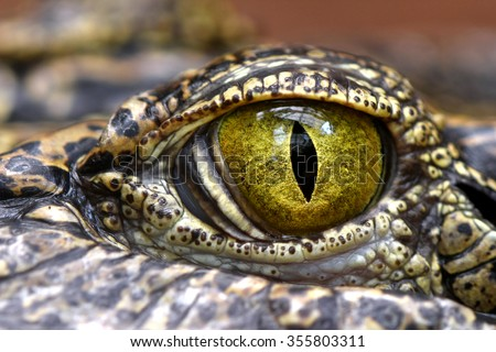 Alligator or crocodile eye close up  - stock photo