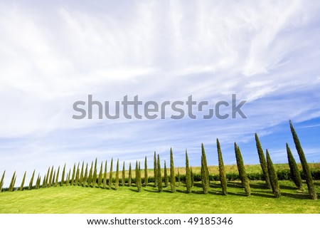 Alligned beatiful green cypress trees under blue sky in Chianti, Tuscany, Italy - stock photo