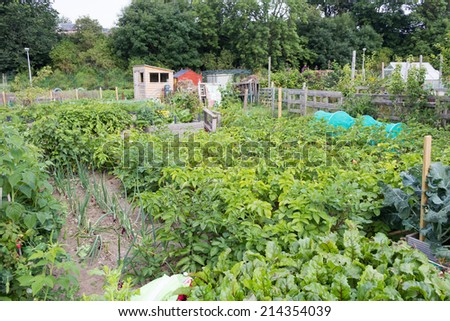 Allotment gardens - stock photo