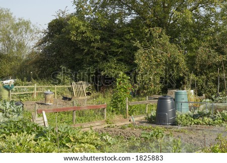 Allotment with growing vegetables, UK. - stock photo