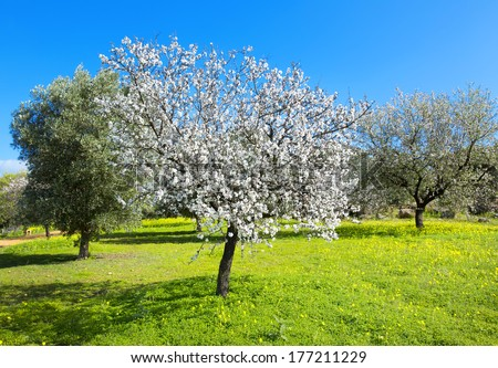 Almond tree at spring, fresh pink flowers on the branch of fruit tree