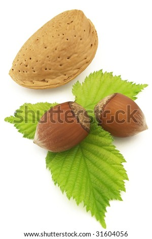 Almond with filbert - stock photo