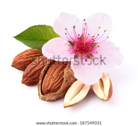 Almonds kernel with flower - stock photo