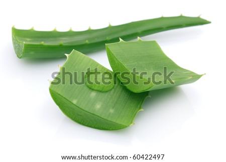 Aloe - stock photo